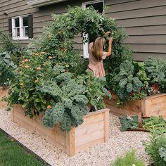 Veg Garden, Vegetable Garden Design, Garden Cottage, Edible Garden, Easy Garden, Backyard Vegetable Gardens, Gutter Garden, Farm Gardens, Outdoor Gardens