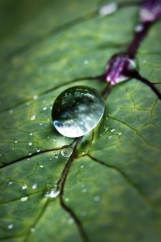 Raindrops and Roses Dew Drops, Rain Drops, Nature Pictures, Beautiful Pictures, Photo Macro, Drops Of Jupiter, Smell Of Rain, Raindrops And Roses, Morning Dew