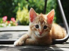 La mirada de un pequeño gato