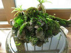 Terrarium green-indoor