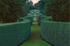 serpentine beech hedge at chatsworth house, england