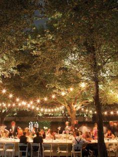 light strands across trees