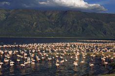 (JAMES WARWICK/AP/PA) Beautiful Lakes Across The World: Lake Natron, Tanzania-A paradise for birds and where you'll catch sightings of bright pink flamingos that take to its shallow salt water for security from predators, Lake Natron is one of Tanzania's magnificent wonders. The edges of the lake are perfect for walking and you can even trek to the streams and waterfalls nearby to escape the heat and enjoy a refreshing dip. Explore the Ol Doinyo Lengai volcano, which is a great place for...