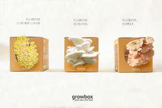 3 Variety of Growbox