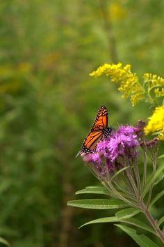 Beautiful Flowers Wallpapers, Beautiful Photos Of Nature, Beautiful Rose Flowers, Beautiful Gif, Beautiful Butterflies, Nature Pictures, Beautiful Birds, Butterfly Video, Butterfly Pictures