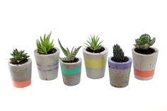 www.popplant.com.au