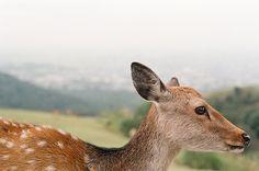 deer   By m•o•m•o