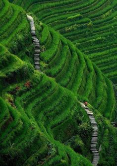 """STAIRWAY TO HEAVEN - LONGSHENG , GUILIN COUNTY- CHINA"" by noel casaje"