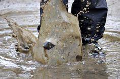 Mud and splash