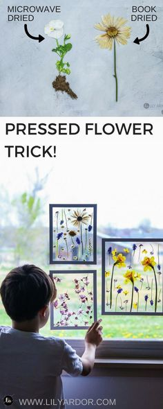 Make pressed flower SUN CATCHERS ART!! Perfect for a mother\'s day gift idea or just flower art! It only takes 3 minutes to dry flowers this way! #hobbyart
