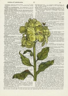 Flower on Book Page