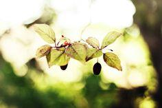 Nature Fine Art Photography Print Large Tree by VanBurensHomeDecor, $15.00