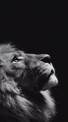 Dark Lion Mobile Wallpaper Mobiles Wall My Life In 2019 Animal