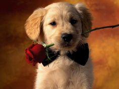 Flowers and jewelry ain't gonna cut it: Valentine's Day with your pet | The Out-U-Go! Blog