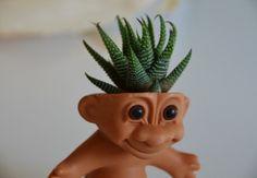 Cacti/aloe plant troll