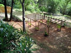 Grape Arbor Plans | BBS Radio is Going Green and Planting the Seed in You