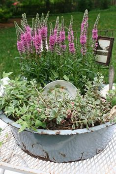 dish gardens in vintage containers are always pretty & neat to do.