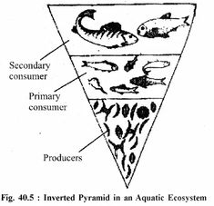 for Class 11 Biology Chapter 29 Classification of Animals