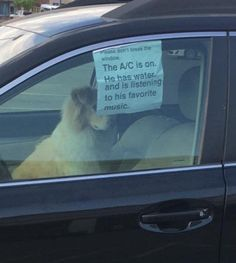Dog Left In Car Is Just Chilling With The Air Conditioning On, Sign Insists