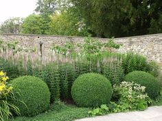 Lovley irregularity with pale flowers matching hues of the stone walls (Dan Pearson garden). Veronicastrum