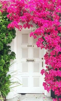 Bougainvillea at Pacific Heights, San Francisco, California Bougainvillea, House Front Gate, Door Shades, Unique Doors, Front Entrances, Entrance Doors, Doorway, House Entrance, Front Doors