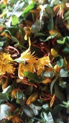 Výroba bylinných magických váčků na ochranu. Možná se pozastavíte nad tím, proč se vracím do dob středověkých čarodějek, od kterých si mnozí návštěvníci odnášeli zavěšený škapulíř s bylinkami, který jim zajišťoval ochranu před zlými silami. Bylinářky znaly kouzelné formule a zaříkávaly bylinky, které později vkládaly do váčků. Většina tajných kouzel, před kterými měl každý respekt,…