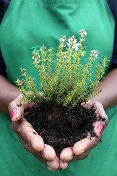 Herb Plants, Herb Farm, Unique Gardens, Garden Accessories, Ecology, Organic Gardening, Herbalism, Kwazulu Natal, Herbs