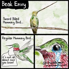 Beak Envy The Sword-Billed Humming Bird has a pretty huge beak - enabling it to get to food, other humming birds can't get to. Each Planet Earth 2 episode i'm drawing some of the key moments. This is from that series.