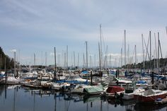 Sailboats, Bainbridge Island