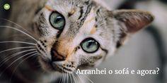 Porquê não se deve borrifar água no gato quando ele arranha o sofá (catnip poderá ser uma solução)