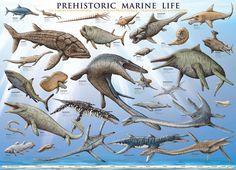 Prehistoric Marine Life poster