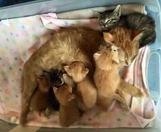 2 Mama Cats Found Clutched Together with 8 Babies Born Just Days Apart