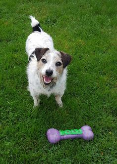 Crusaders Dog Welfare ‹ Log In 8 Year Olds, Terrier, Handsome, Pets, Animals, Character, Heart, Garden, Animales