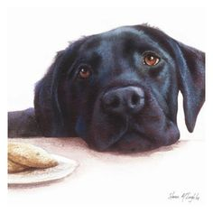 Mind Blowing Facts About Labrador Retrievers And Ideas. Amazing Facts About Labrador Retrievers And Ideas. Labrador Noir, Black Labrador Dog, Black Labrador Retriever, Labrador Puppies, Corgi Puppies, Cute Dogs And Puppies, Doggies, Pet Dogs, Labrador Retrievers