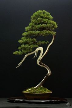 Pietraszko Balancing crane or ballet dancer about to prance … Juniper Bonsai, Literati style (Bunjingi).Balancing crane or ballet dancer about to prance … Juniper Bonsai, Literati style (Bunjingi). Ikebana, Plantas Bonsai, Deco Floral, Arte Floral, Ancient Japanese Art, Juniper Bonsai, Juniper Tree, Miniature Trees, Bonsai Garden