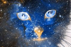 Cosmic Kitten Graphic Art
