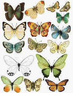 Tons and tons of butterfly and moth images. Perfect for altered art or paper crafts of any kind. (I printed out, like, 10 of these on my office printer! shhhh....) Forums / Images & Graphics / Butterflies - Swirlydoos Monthly Scrapbook Kit Club