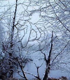 Acertijo óptico. ¿Qué se esconde en los árboles?