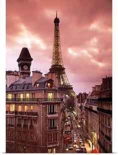 Rose magnifique et blush Paris photographie