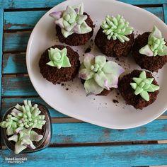 Edible Succulent Terrarium Cupcakes