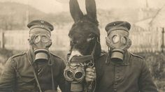 1916 -- German soldiers and their mule wearing gas masks in WW1.