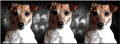 Rae, the Jack Russell Terrier.  Three times the fun!  #JRT #Dogs