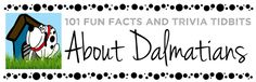 101 Things About Dalmatians | Fun Facts and Trivia Tidbits about Dalmatians
