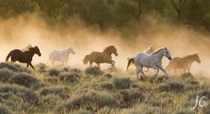 Morning Stampede by jimmygaglio - 800 Horses Photo Contest