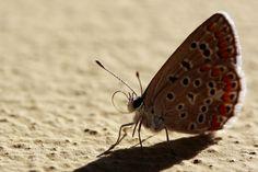 #macro #butterfly