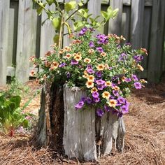 What to do with that tree stump you can't take out of your yard?  Transform it into a beautiful planter!