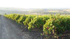 #tramonto sul #vulture...#vignemastrodomenico
