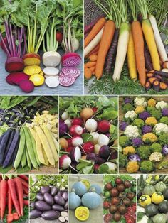 There are a lot of really good reasons to grow heirloom vegetables, with the most obvious being their colour. Pretty amazing aren't they? You can view more gardening ideas on our site at theownerbuilderne. Colorful Vegetables, Fruits And Vegetables, Colorful Food, Root Veggies, Healthy Vegetables, Organic Recipes, Raw Food Recipes, Taste The Rainbow, Rainbow Things