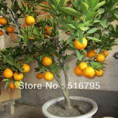 Seja por conta das lembranças de infância, seja pela satisfação de retirar uma fruta do pé, uma árvore frutífera é objeto de desejo para quem vive em casa, mas também pode ser possí...