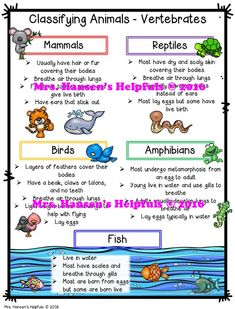 What are the different animal classifications? What is a vertebrate? These printable posters are ready to go for learning and will save precious time. These help breakdown the different animal groups. http://hansenshelpers.blogspot.com